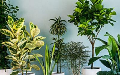 5 начина да подобрим въздуха у дома